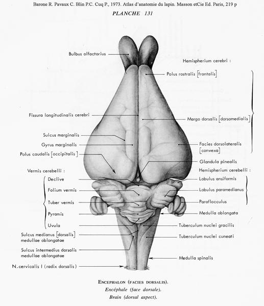 Index of /Docs/Biologie/Pl-anatomie