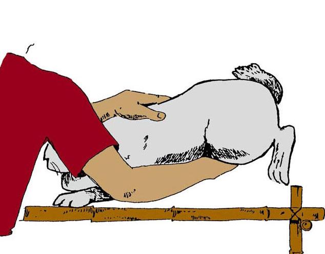 حصريا : صور لتوضيح الجس على منتدى الأرانب للجميع فقط Figure-44-palpation-3